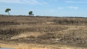 Das Plateau in Vitrolles bietet nach dem verheerenden Brand einen trostlosen Anblick.